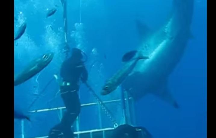 Video youtube sub esce dalla gabbia di protezione e tocca enorme squalo bianco7 blitz quotidiano - Finestre pensione 2015 ...
