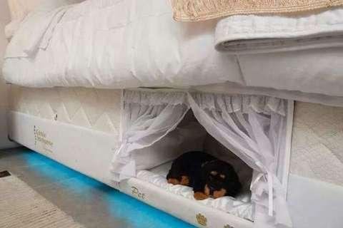 Cuccia nel materasso per dormire col proprio cane2 blitz for Per dormire materassi opinioni