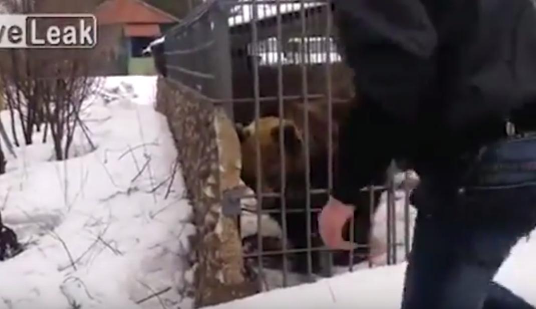 Youtube ubriaco mette la mano nella gabbia e l 39 orso 3 for Youtube la gabbia