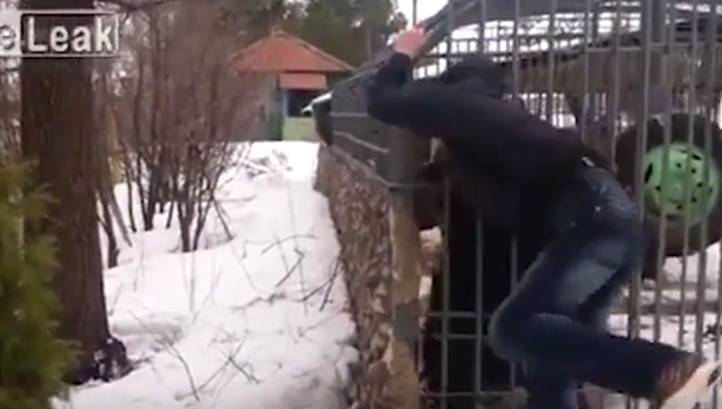 Youtube ubriaco mette la mano nella gabbia e l 39 orso 8 for Youtube la gabbia