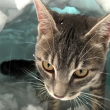 VIDEO YOUTUBE Gatto Boots si costruisce un igloo nella neve