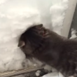 VIDEO YOUTUBE Gatto Boots si costruisce un igloo nella neve 2