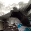 VIDEO YOUTUBE Gatto Boots si costruisce un igloo nella neve 3