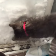 VIDEO YOUTUBE Gatto Boots si costruisce un igloo nella neve 5