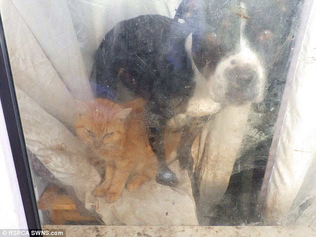 Casa piena di gatti e cani in decomposizione arrestata 5 - Casa piena di zanzare ...