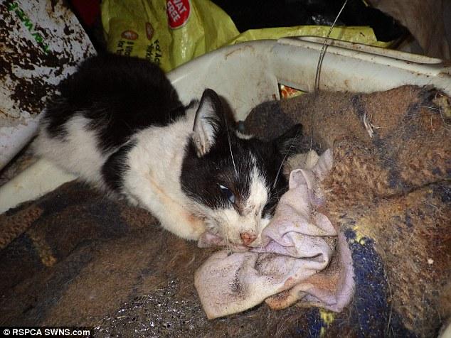 Casa piena di gatti e cani in decomposizione arrestata7 - Casa piena di zanzare ...