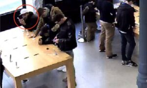 Ladri roditori all'Apple Store: rubano gli iPhone a morsi