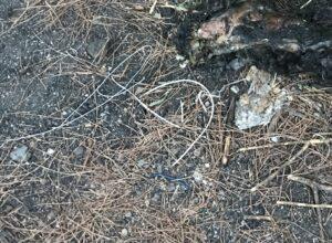 """Vesuvio, gatti vivi per appiccare incendi? Paolo Bernini (M5s): """"Ho la foto"""""""