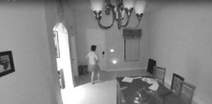 Gatto fa cadere a terra la cornice: in casa scatta l'allarme, scoppia il panico