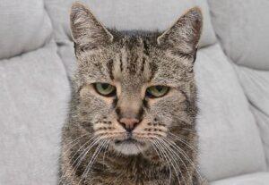 Nutmeg, morto il gatto più vecchio del mondo: 32 anni, cioè 144...
