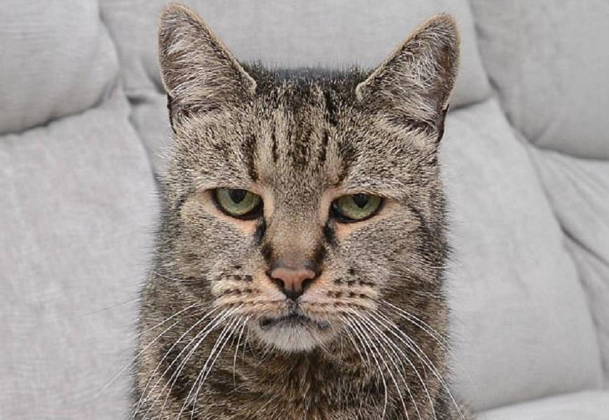 Calendario Eta Gatti.Nutmeg Morto Il Gatto Piu Vecchio Del Mondo 32 Anni Cioe