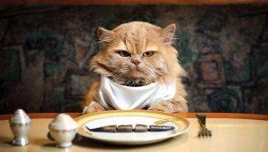 Gatti- cibo-dieta