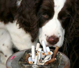 cane-fumo