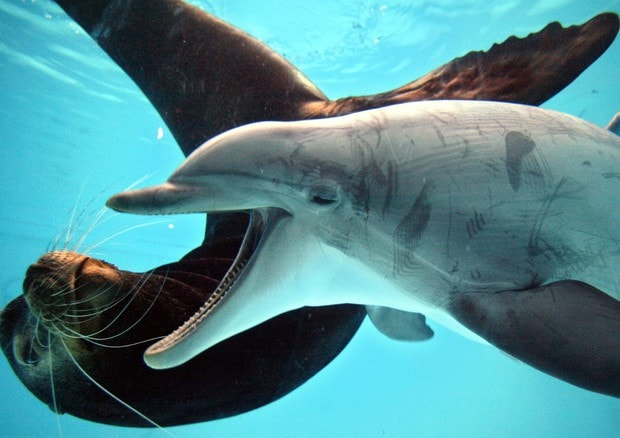Delfini nei parchi acquatici sar possibile farci il bagno insieme - Bagno coi delfini roma ...