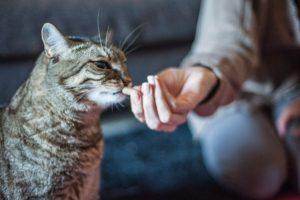 Qualche consiglio per dare le medicine a cani e gatti