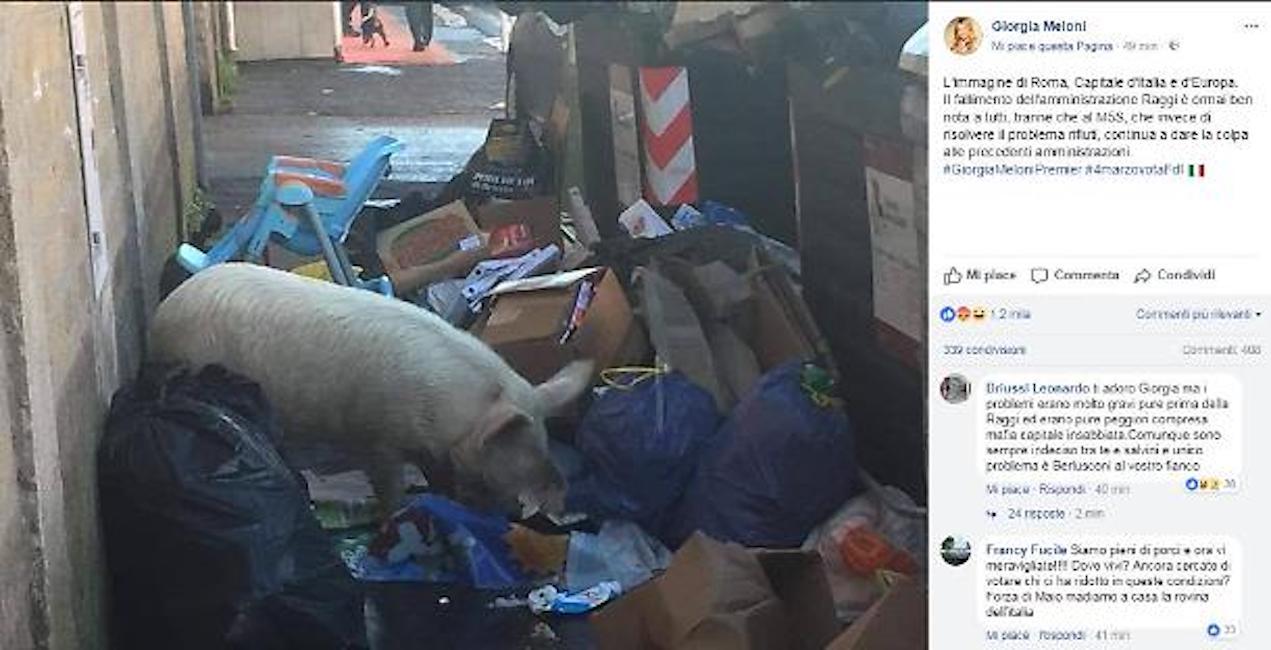 Degrado Capitale: maiale rovista tra i rifiuti