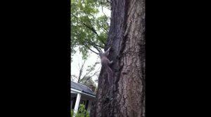 scoiattolo-albero-gatto
