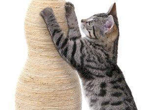 Come impedire che i gatti si facciano le unghie sui divani