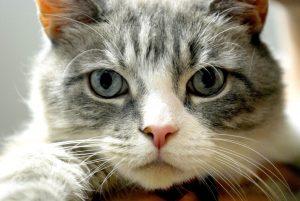 Ladri in un appartamento di Spoleto: sparisce anche il gatto