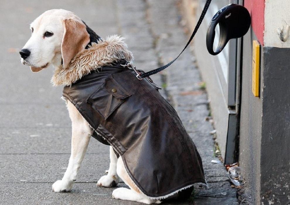 Genova cane fa pip in strada bottigliette d 39 acqua per - Eliminare odore pipi cane giardino ...