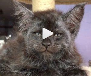 Il gatto con l'espressione umana: il video virale sul web