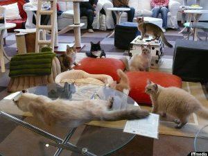 Cat hotel, in Giappone gli alberghi con i gatti