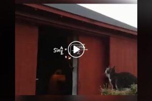 Gatto indeciso: salto o non salto? Il video di Leonardo Pieraccioni