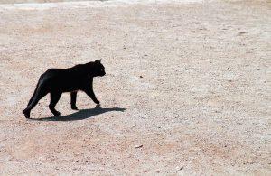 Superstizione Sotto La Scala Gatto Nero Ecco Perché Sfortuna