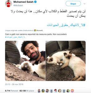 Salah vuole salvare 4000 cani e gatti randagi egiziani dal macello