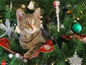 Immagini Natale Con Gatti.Natale Con Gatti E Cani 12 Cibi E Piante Pericolosi Per Loro