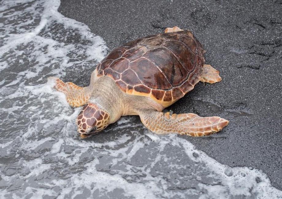 Bari strage di tartarughe pescatori le decapitano per for Tutto per le tartarughe