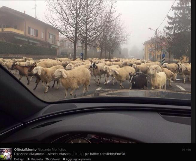 """Montolivo arriva tardi agli allenamenti: """"Colpa di un gregge di pecore"""""""