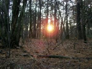 Thomas Colnaghi, bancario scomparso e ritrovato cadavere in un bosco vicino Como