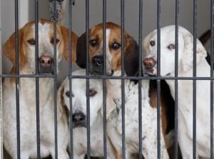 Grosseto: Tares scontata se adotti un cane di almeno 5 anni. Comune ci pensa