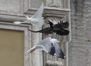 Il corvo e il gabbiano assalgono la colomba del Papa: un caso, un segno...