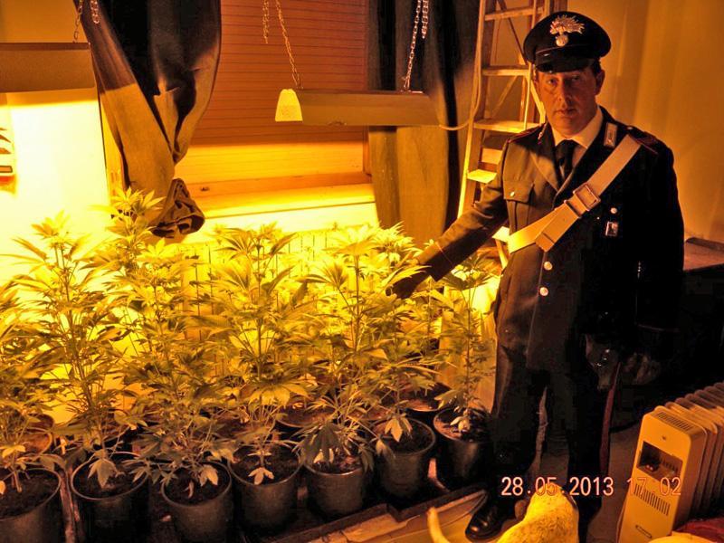 Cannabis? Uso terapeutico: scarcerato Cosimo Fonzetti, bracciante