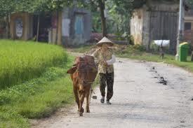 Insonne dal 1973, il caso di un contadino vietnamita