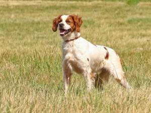 Mario Monzio Compagnoni accoltellò un cane: assolto per legittima difesa