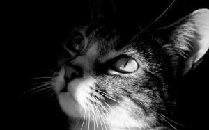 Villa d'Adda (Bergamo), sparano ad una gatta al parco: ricoverata