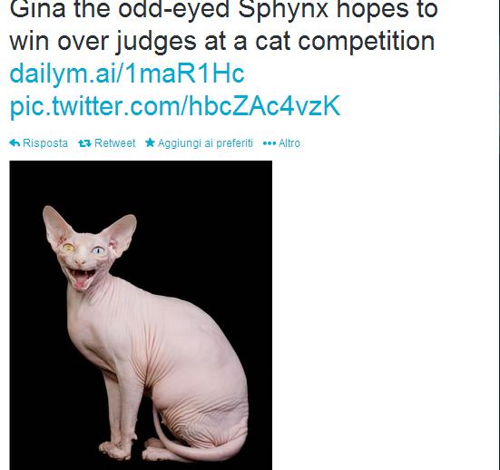 Gina, il gatto Don Sphynx con gli occhi bicolore