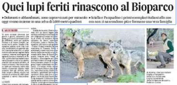 Scialla e Pasqualino, i lupi sopravvissuti per miracolo