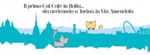"""""""Gatto caffè"""" arriva a Torino: cappuccino, brioche e coccole feline al """"MiaGola"""""""
