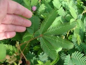 Imparare e memorizzare informazioni: anche le piante ne sono capaci...