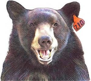 Polpetta, orso-star di Los Angeles: famoso su Twitter, fa litigare per soldi...