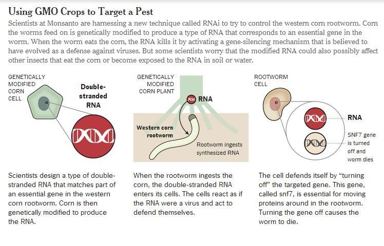 Monsanto e RNAi, arma genetica contro gli insetti: paura e speranza per l'agricoltura
