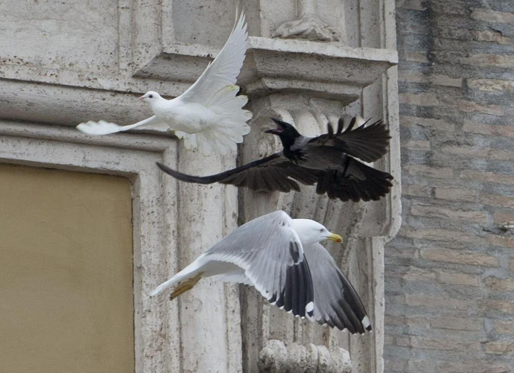 Papa Francesco libera una colomba: corvo e gabbiano l'aggrediscono (foto) 02