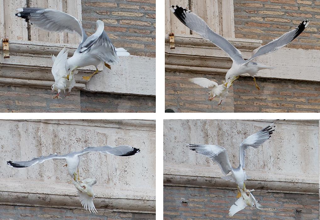 Papa Francesco libera una colomba: corvo e gabbiano l'aggrediscono (foto) 06