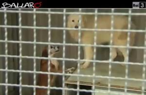 A Solarino (Sr) se adotti un cane non paghi la Tares (video)