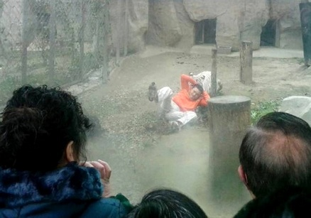 Cina, entra nella gabbia delle tigri e si offre come pasto: salvato (video)