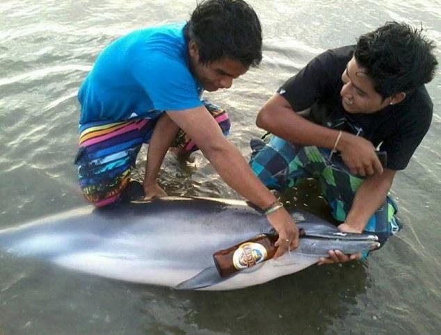 Perù, ragazzi danno birra al delfino spiaggiato01